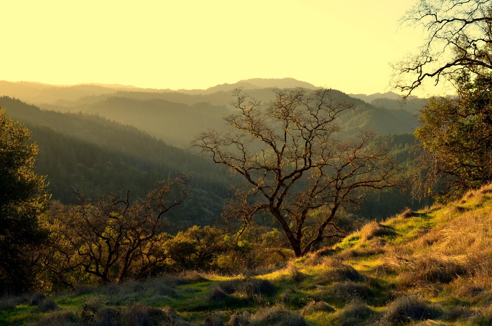 Dusk on Gilliam Trail